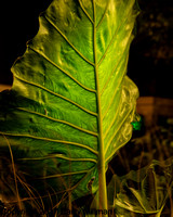 Night photography at Tower Hill Botanic Gardens. #2